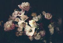 FLORES / by Betty Heinimann