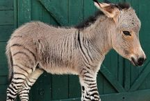Unusual Animals / Animals that are either unusual in features or kind.