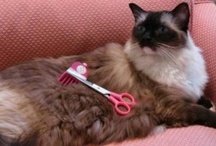 Cat Grooming Supplies / Cat grooming supplies are essential for the well being of your kitty's coat.  Learn more about them.  http://www.floppycats.com/category/groom