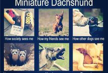 Doxies! :) ❤️ / For the love of wiener dogs :)  / by Michelle Gerhardt