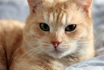 Ottone: my red cat