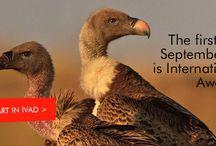 Vultures education