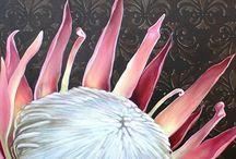 proteas vir ingrid