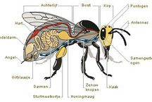 anatomie insect