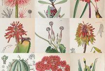 My Stock: Botanical Prints
