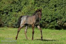 Konie - Źrebaki