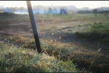 猫じゃらしはシーズン終了ですね。 It's a scene in this morning. #inthismorning #farm #foxtail #snapshot #fineday #猫じゃらし #今朝の風景 #まもなく冬写真