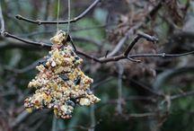 Vogelfutter winter
