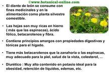 Natural-medicinal / Medicina- Natural