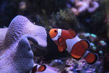 saltwaterfish