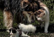 Unusual friendships between animals