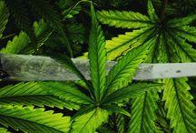 Medical Marijuana Designs / The Growing Herbal Marijuana Industry Means A Demand For Marijuana Logos And Designs