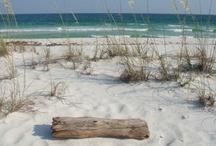 Surf and Sunny Joy / by Alicia Hackett