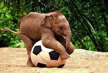 Soccer / ⚽️⚽️⚽️⚽️⚽️⚽️⚽️⚽️⚽️⚽️⚽️⚽️⚽️