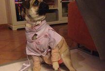 Trench EvenBeen per piccoli dog / Abbigliamento per cani