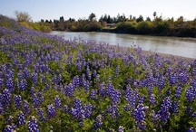 Russian River Valley  / The Beauty of the Russian River Valley