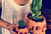 Cactus pinhead