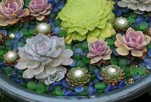 Rastlinky / Kvety, bylinky