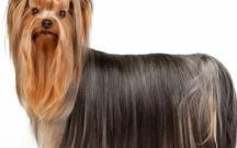 Z poradnika TWOJEZOO dla psa :) / Porady na czasie dla wszystkich, kochających psy:) Moda, trendy, żywieniowe, problemy behawioralne- tylko na www.twojezoo.pl