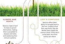 Pesticides damaging bees