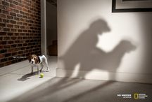 Dogs Ads