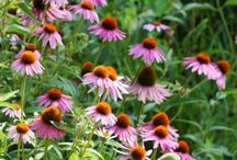 Grow Native / Missouri's native flowers, shrubs, plants and trees / by Missouri Conservation