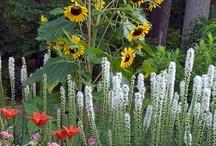 flower cutting garden