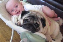 bichos e bebes