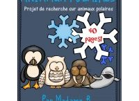 Animaux polaires 2016-2017