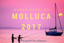 Molluca 2017