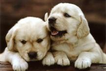 puppys / by Mandi Willis