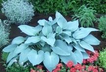 Härliga växter