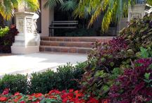 Garden - Entrance to home / Curb appeal