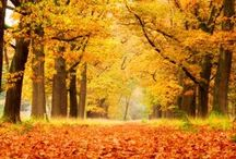 Autumn Photography / Beautiful photographs of autumn, perfect for using as wallpaper.