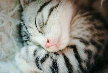 Kociaki i inne słodziaki