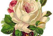 Кртин  цветов