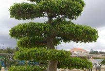 stromy, příroda
