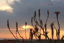 Sunsets / setting sun