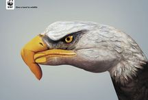 Other Pinners / by WWF Deutschland