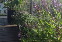 Rooftop gardens / Mange af os, der bor i lejligheder med altaner og adgang til en  tagterrasse, har brug for inspiration til planter, spiseligt grønsager og kreative ideer til grønne haver i mange niveauer.