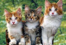 Kissat / Cats