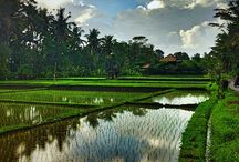 Bali / a wonderful tourist place