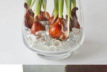 Bloemen en planten / Leuke tulpen in vaas
