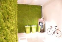 Moss Wall / Moss Wall