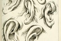 Orr,száj és fül rajzok (noses,mouth and ears draws)