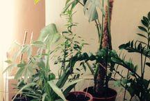 Plants / Plants, home dizajn