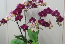Jardín orquídeas