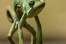Creatures I Love  / by Joy Ninth