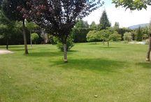 Home Service Center Kertészeti munkák / Sövénynyírás,bozótirtás,fűnyírás,egyéb kertgondozási munkák