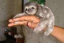 Állatok / Állatokról készült kedves, vicces, megható képek